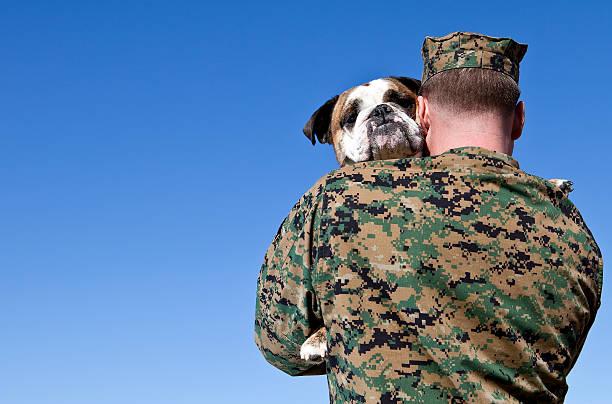 военный человек hugs собака - псовый стоковые фото и изображения