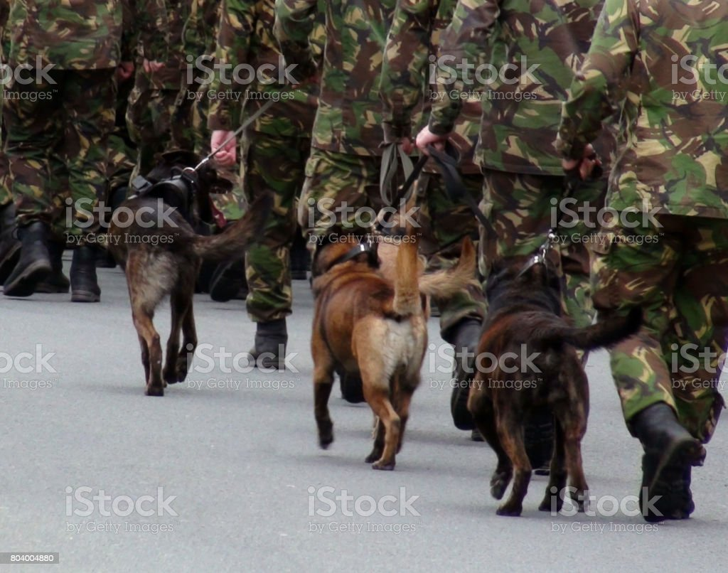 Military Officers Marching With Security Dogs stock photo