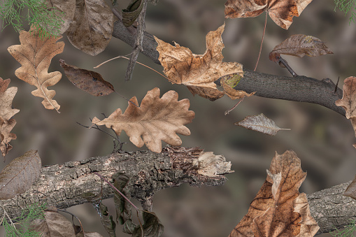 Realistic autumn forest pattern. Trunks of trees, leaves and grass camouflage pattern for military or hunters