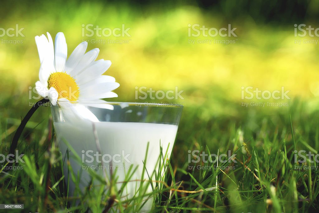 Milk and daisy royalty-free stock photo