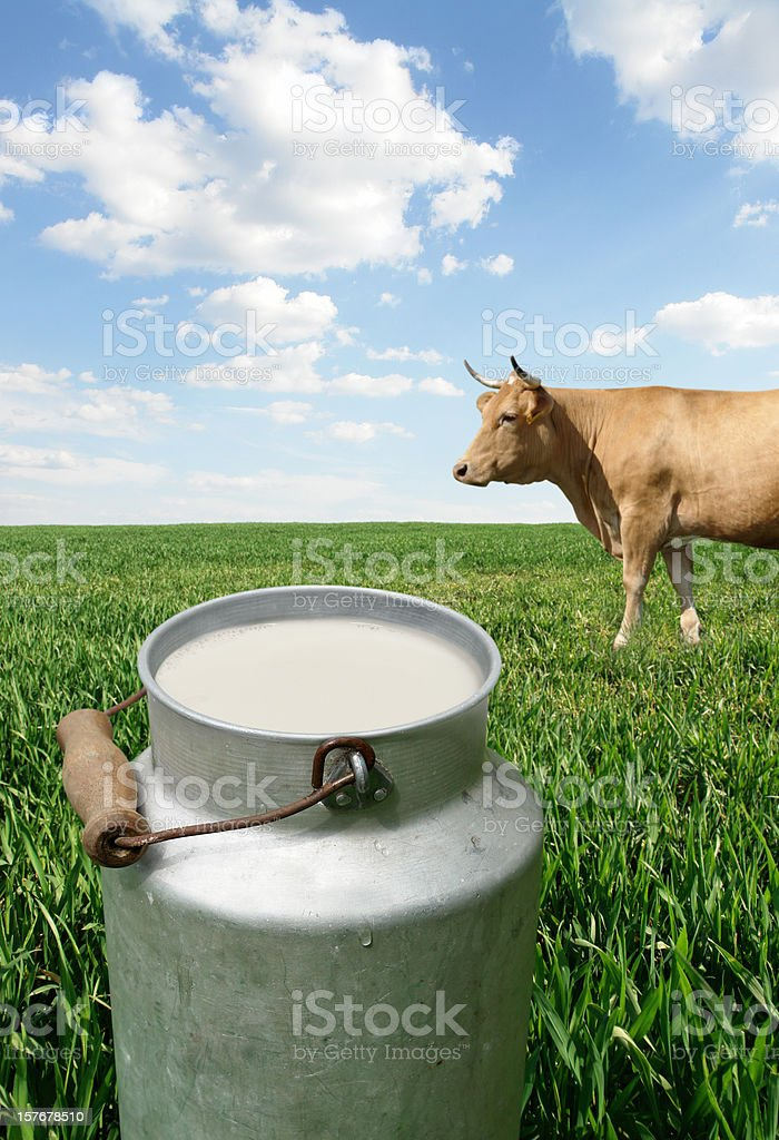 Milk Container and Cow on the Green Field royalty-free stock photo