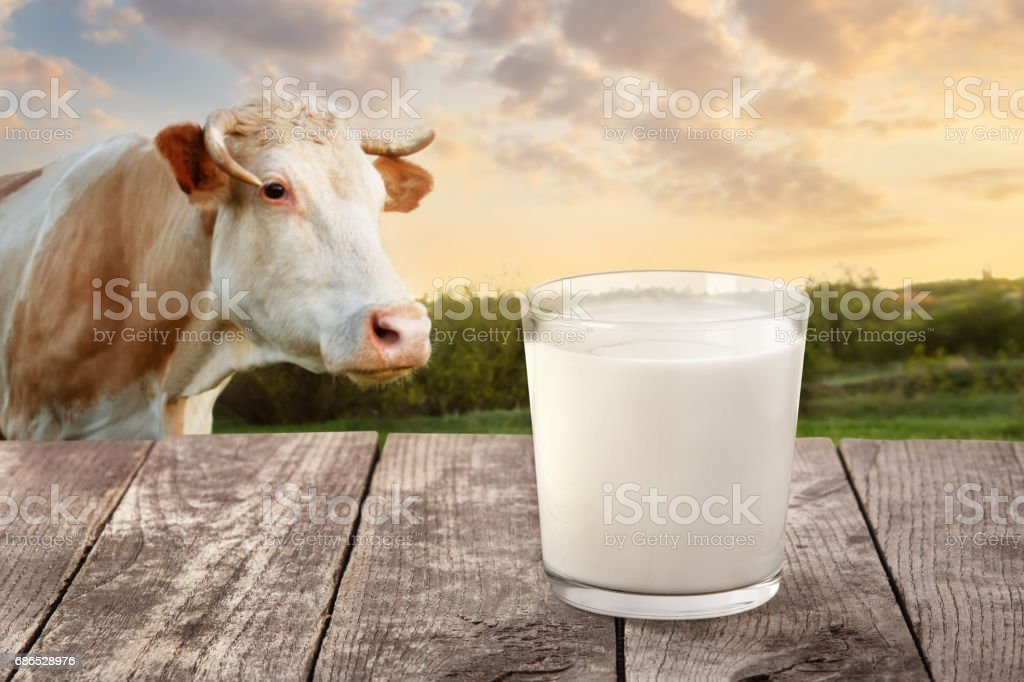 milk in glass on table with cow foto stock royalty-free