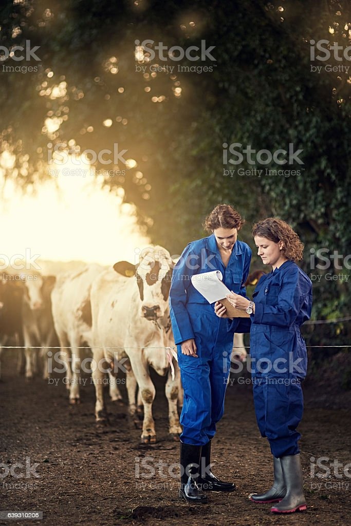 Milk production is rising steadily Shot of two female farmers looking at a clipboard together while standing outside by their cows Adult Stock Photo