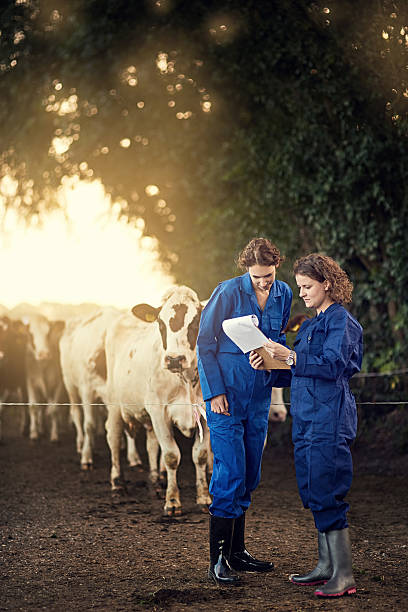 Milk production is rising steadily Shot of two female farmers looking at a clipboard together while standing outside by their cows female animal stock pictures, royalty-free photos & images