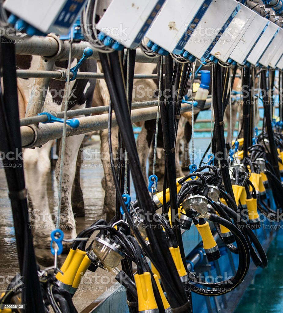 Milking parlour machinery royalty-free stock photo