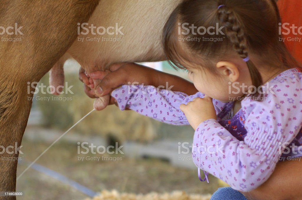 Milking royalty-free stock photo