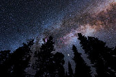 Milky Way in Cygnus constellation above spruce tree silhouettes.