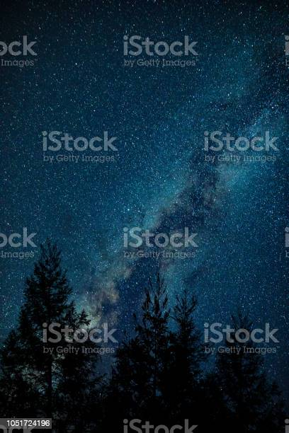 Photo of Milky Way above forest tree