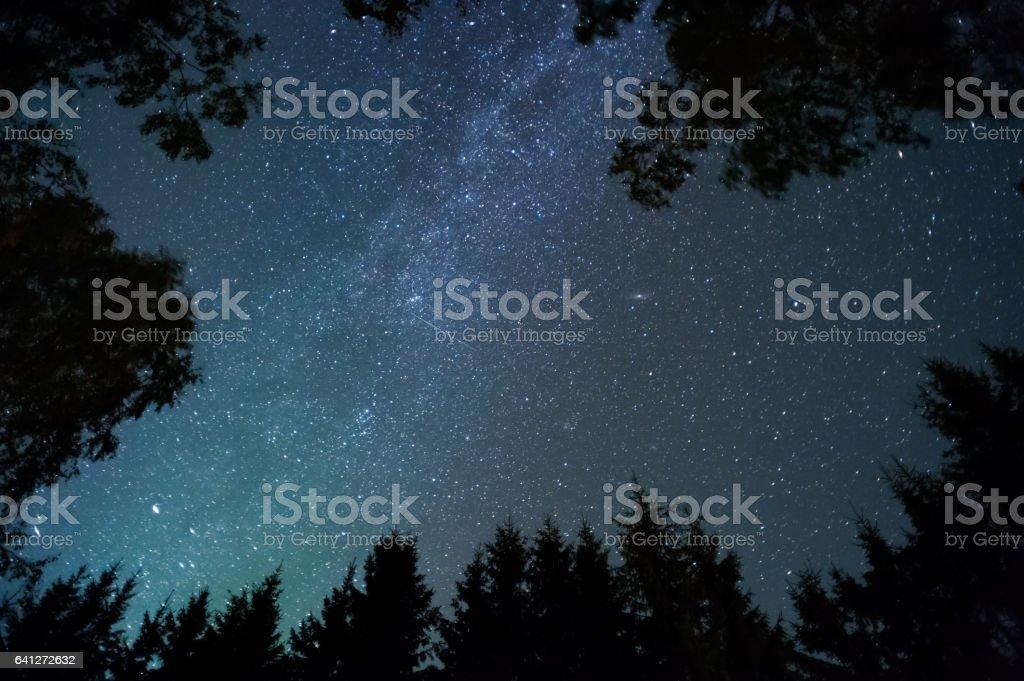 Milky way and stars above treetops stock photo