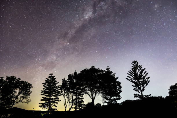 Milky Way and Tree Silhouettes Nightscape stock photo
