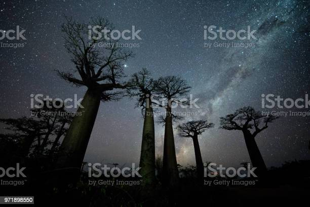 Photo of Milky Way at Avenue of the Baobabs