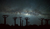 Milky Way at Avenue of the Baobabs