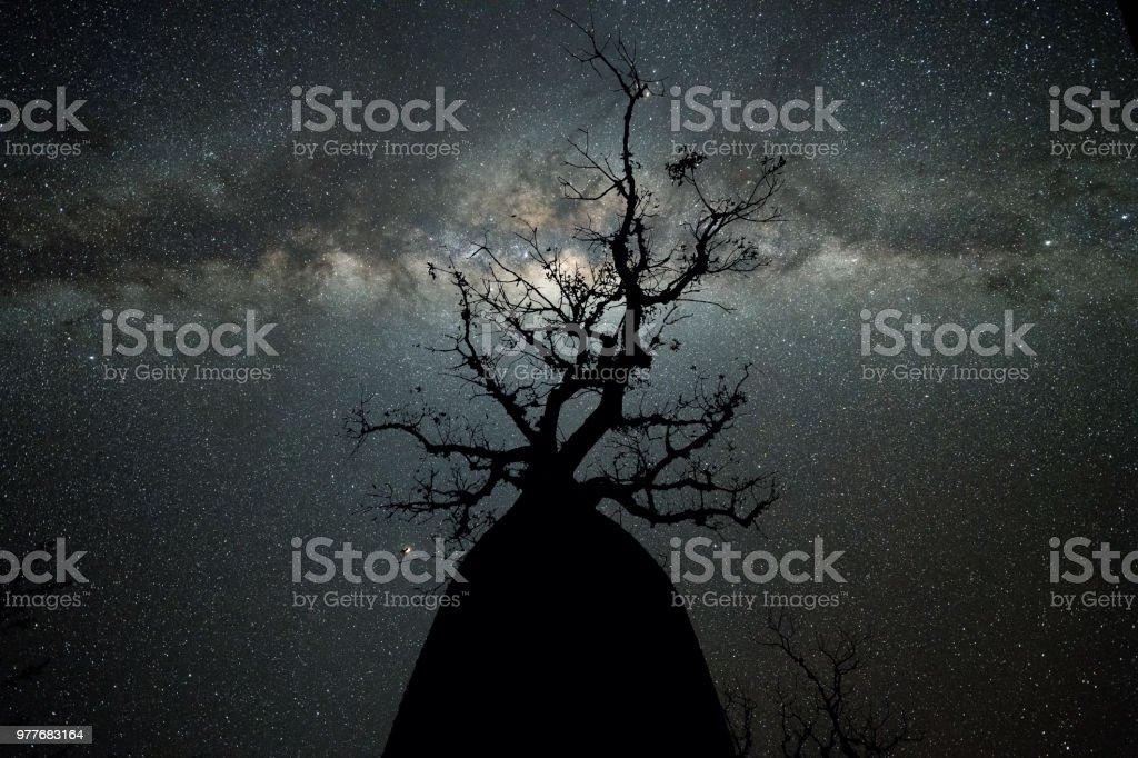 Vintergatan på Avenue av Baobabs bildbanksfoto