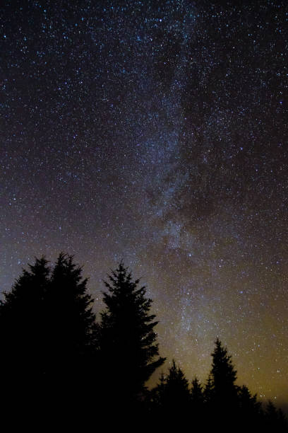 Milky way from forest in the Brecon Beacons National Park Relatively clear view of the galaxy with coniferous forest silhouette in foreground, in Wales, UK brecon beacons stock pictures, royalty-free photos & images
