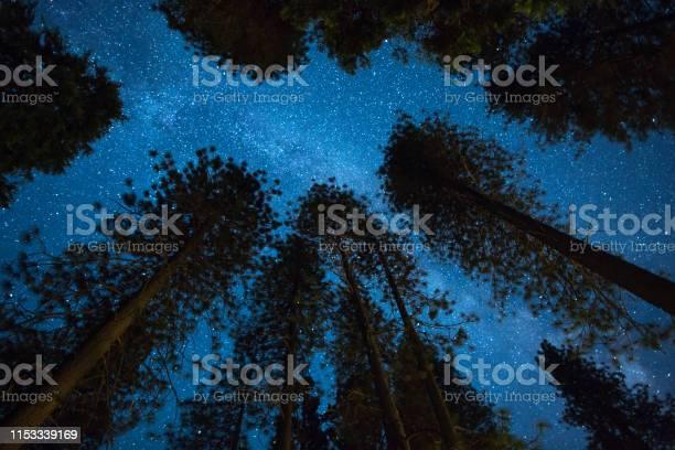 Photo of Milky Way Night Sky - Above the Treetops