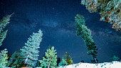 Milky Way peeping through Sequoia trees