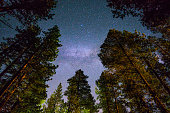 Milky way over a redwood forest, California