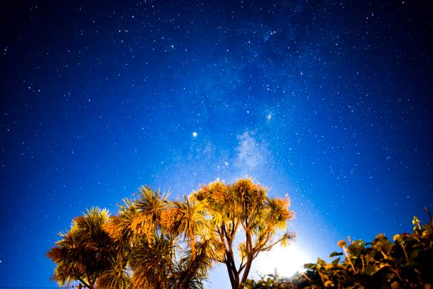 Milky Way over Cabbage tree in New Zealand stock photo