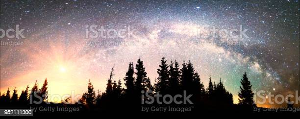 Photo of Milky Way over the Fir-trees