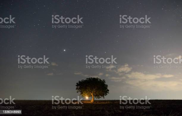 Photo of Milky way passes over a lonely tree in a field at night.
