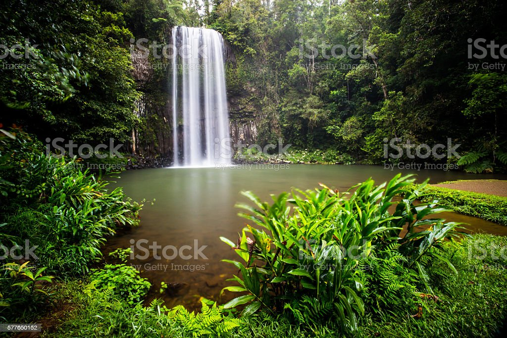 Millaa Millaa Waterfall stock photo
