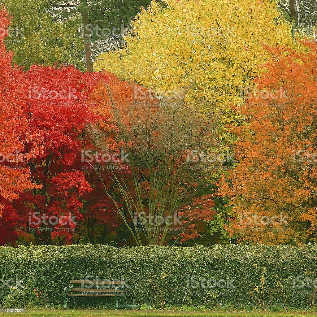 Millenium Gardens Autumn Ferndown Dorset stock photo