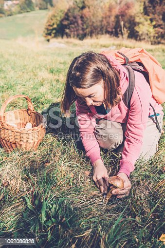 Millennial woman picking mushrooms at the foot of the Alps, Banjsice in Slovenia, Europe. Nikon D850.