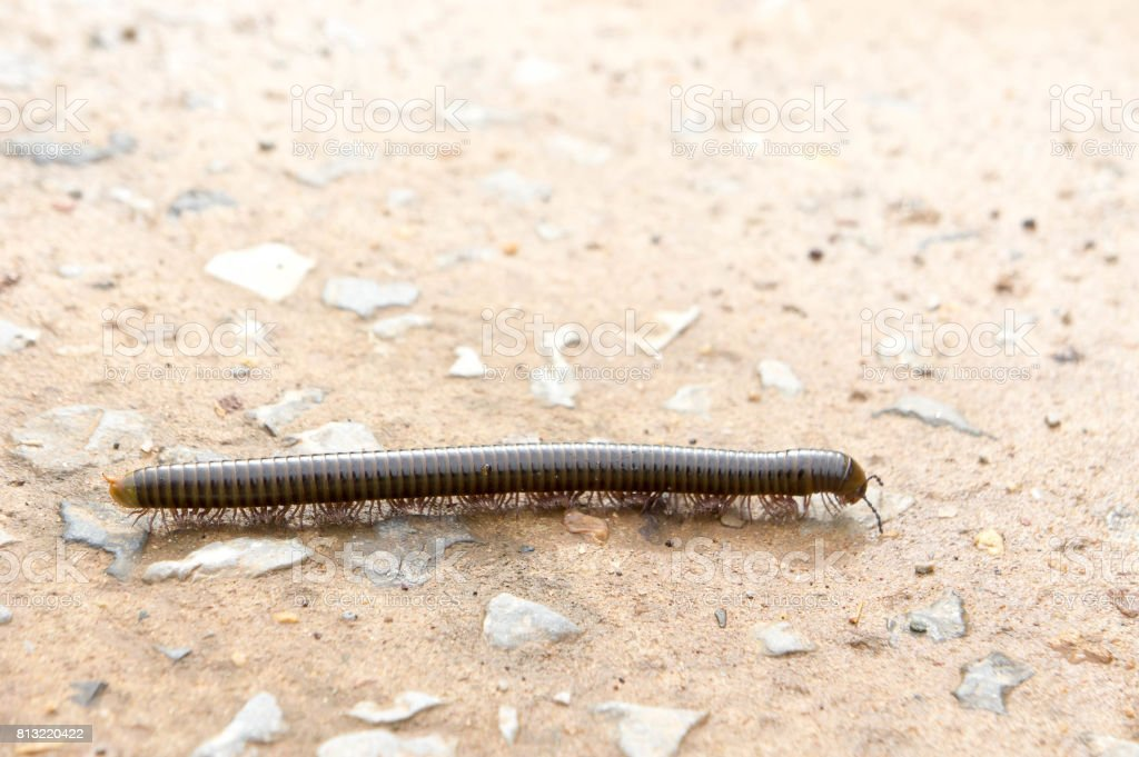 millipede on the floor of the house in the rain. stock photo