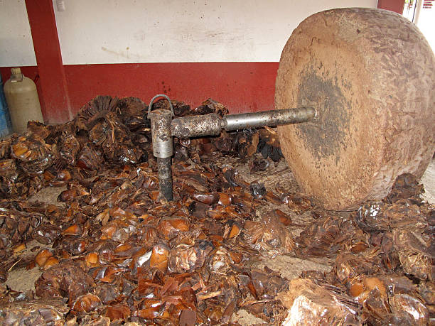millstone at mezcal production, oaxaca, mexico - mezcal fotografías e imágenes de stock