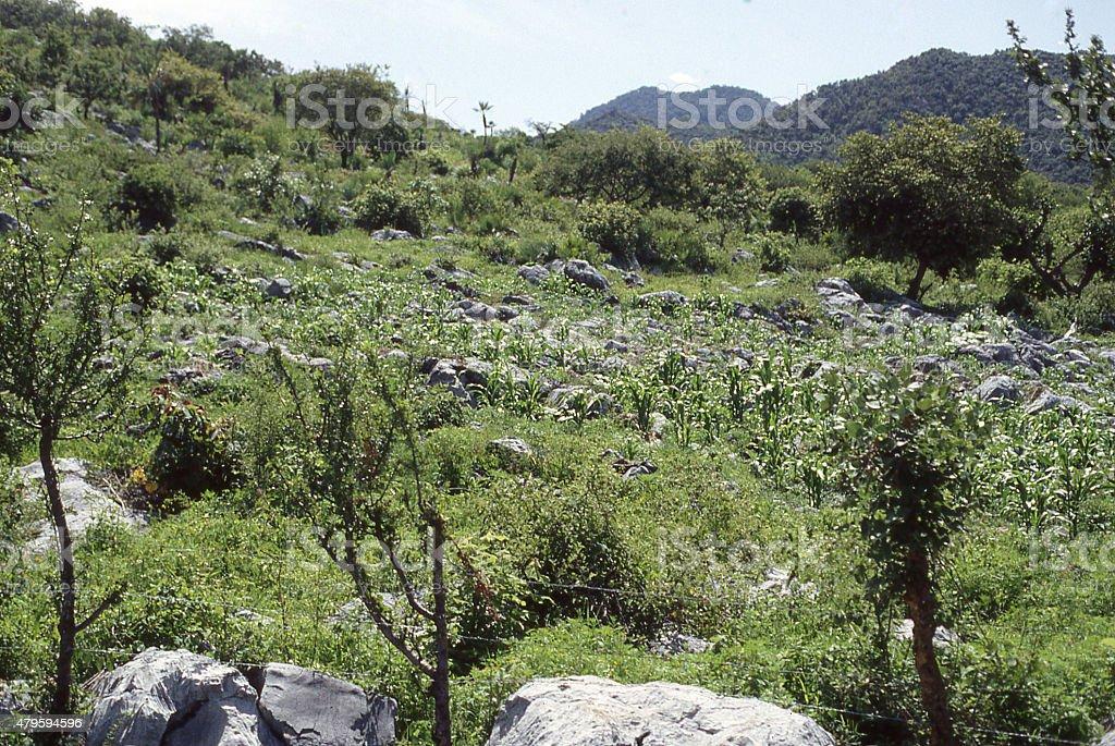 Milpa traditional subsistence farm eroded hillside near Taxco Guerrero Mexico stock photo