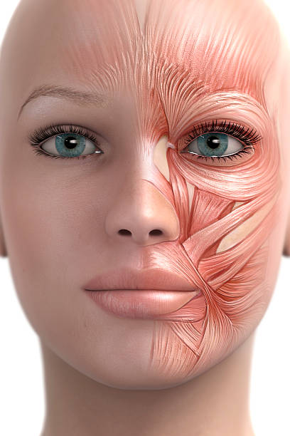 Mimic muscle of the face stock photo