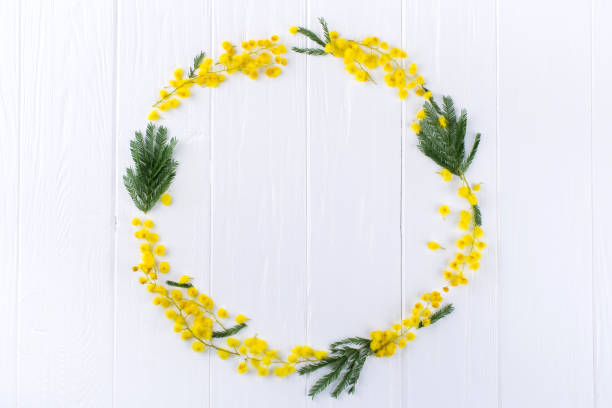 mimosa circle frame  on white background . space for text. floral background. - immagini mimosa 8 marzo foto e immagini stock