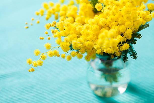 Mimosa flower stock photo