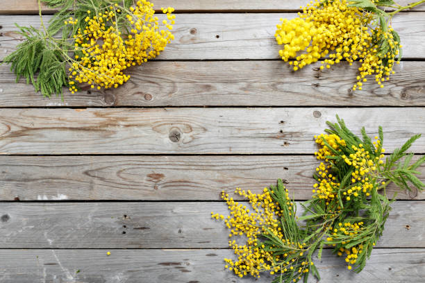mimosa flowers on gray wooden background. old wooden table. copy space for text. twine roll - immagini mimosa 8 marzo foto e immagini stock