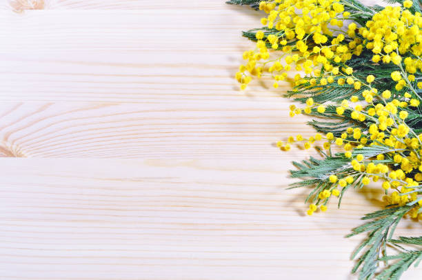 mimosa flowers on the light wooden background, spring background - immagini mimosa 8 marzo foto e immagini stock