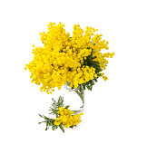 mimosa in a glass glass vase isolated on white background