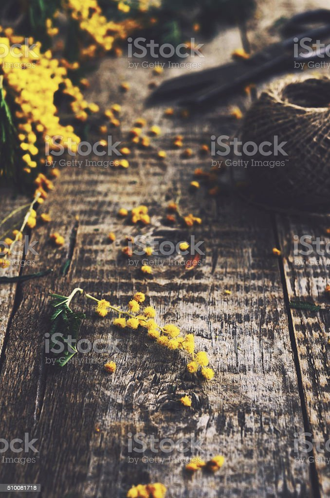 Mimosa on rustic table stock photo