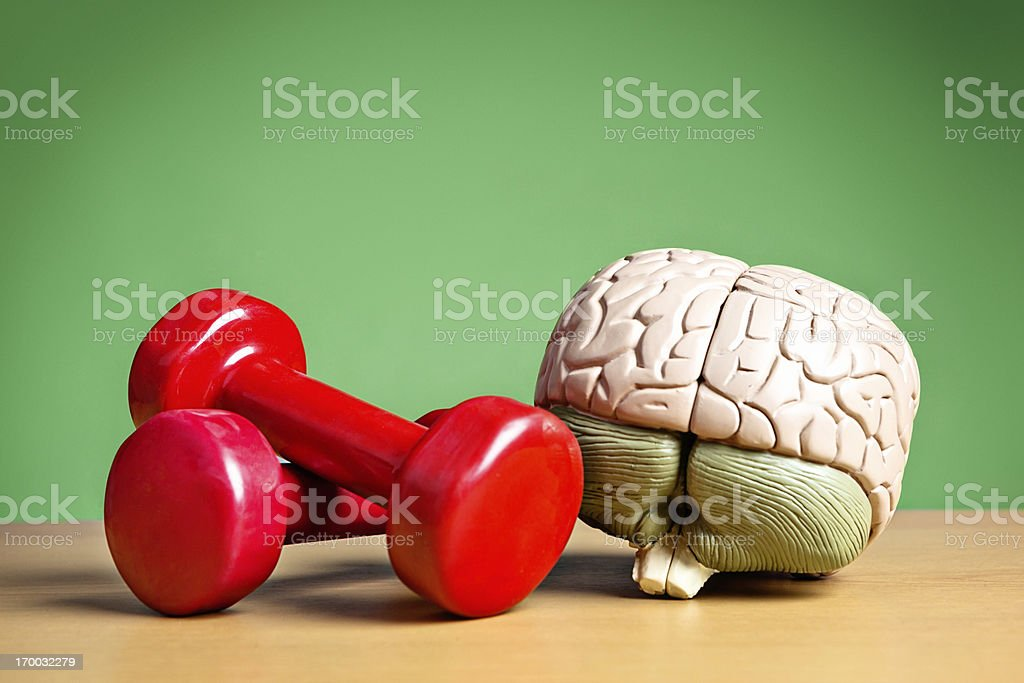 Mind and body working synergistically: model brain with barbells stock photo