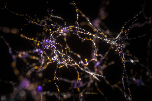Mind during 2019-nCoV Interconnected neurons transferring information with electrical pulses.medical illustrations,BCI autoreceptor stock pictures, royalty-free photos & images