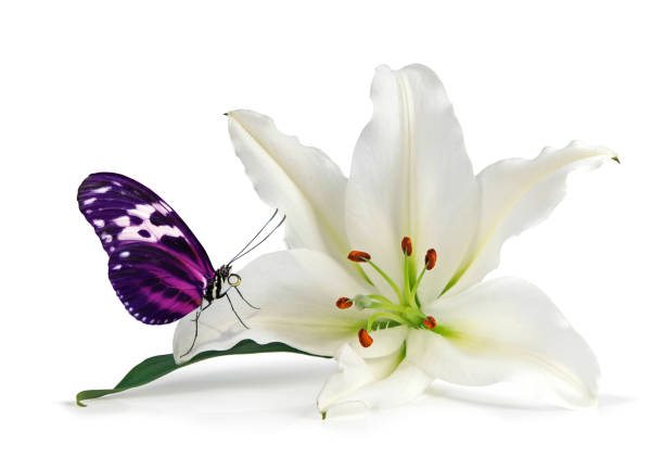 Mindfulness moment with lovely lily and beautiful butterfly picture id698567940?b=1&k=6&m=698567940&s=612x612&w=0&h=isibf4hpsqbmzauvjqfg 4ujkrmnoycyxo7wlkfpskq=