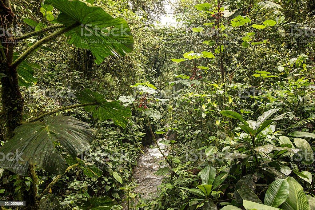 Mindo in the tropical rainforest of Ecuador stock photo