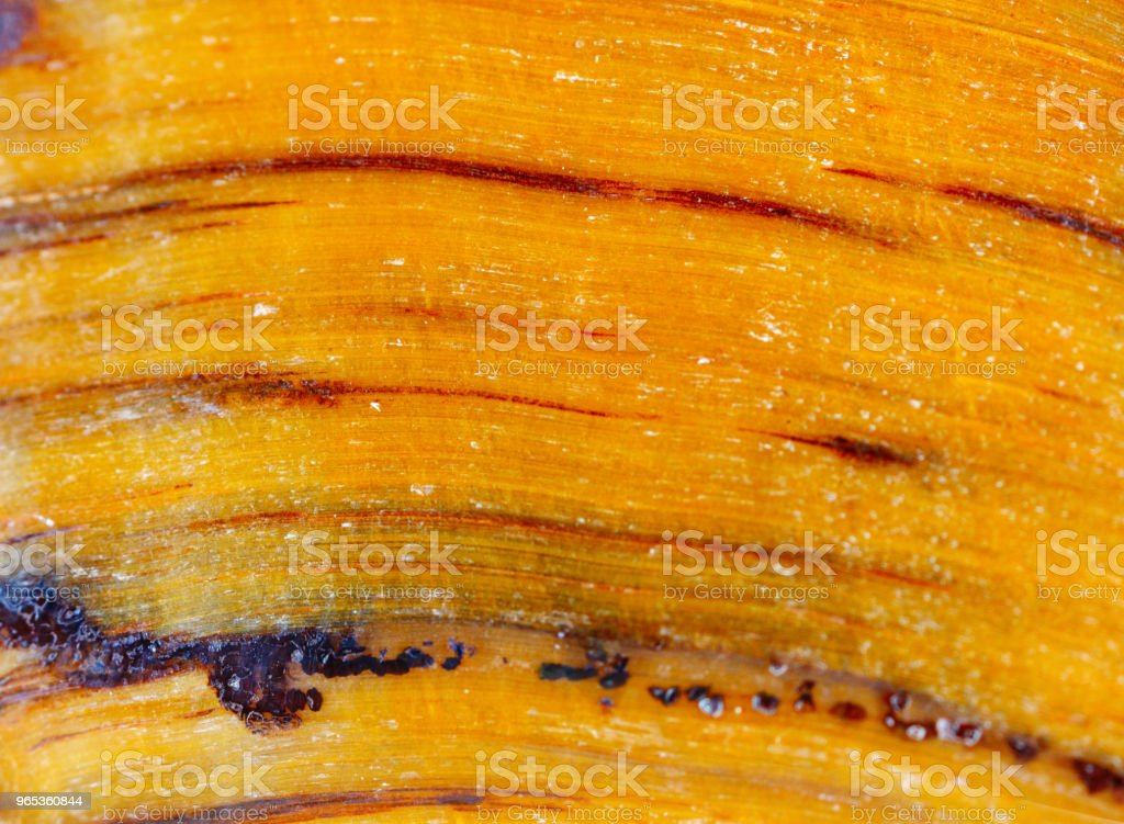 Mineral tiger's eye. The texture of the mineral. Macro shooting of natural gemstone. The raw mineral. Abstract background zbiór zdjęć royalty-free
