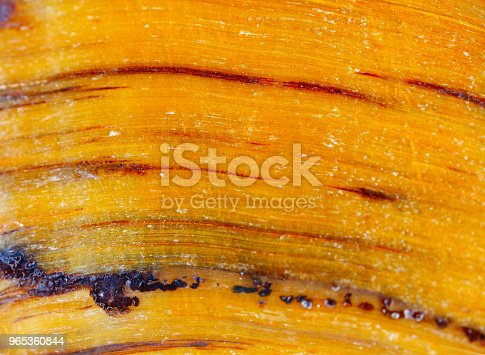 Mineral Tigers Eye The Texture Of The Mineral Macro Shooting Of Natural Gemstone The Raw Mineral Abstract Background - zdjęcia stockowe i więcej obrazów Abstrakcja