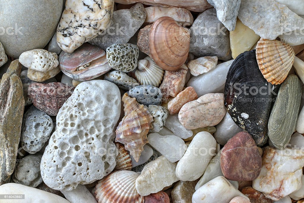 Minerals and shells stock photo
