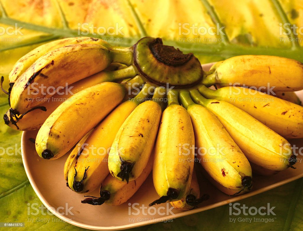 mini banana bunch on palm leaf tree stock photo