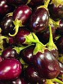 close up of miniature eggplants