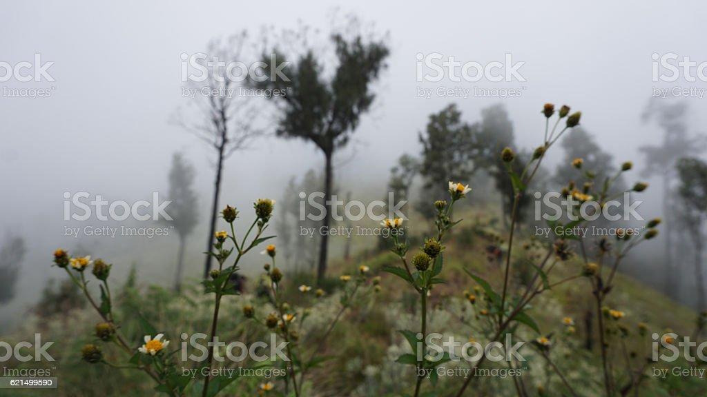 Mini flower in cloudy Lizenzfreies stock-foto