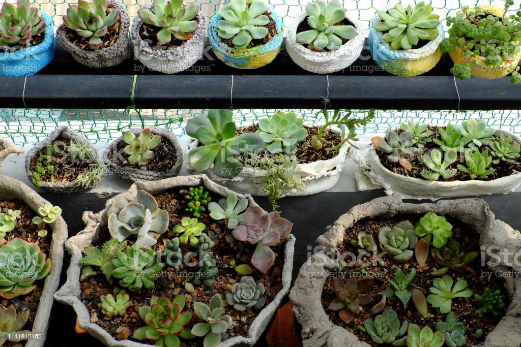 Minigarten Auf Balkon Des Hauses Mit Kaktus Saftig Stockfoto ...
