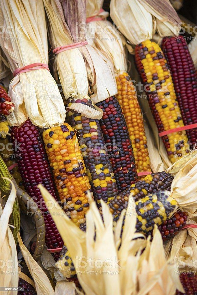 Mini Indian Corn royalty-free stock photo