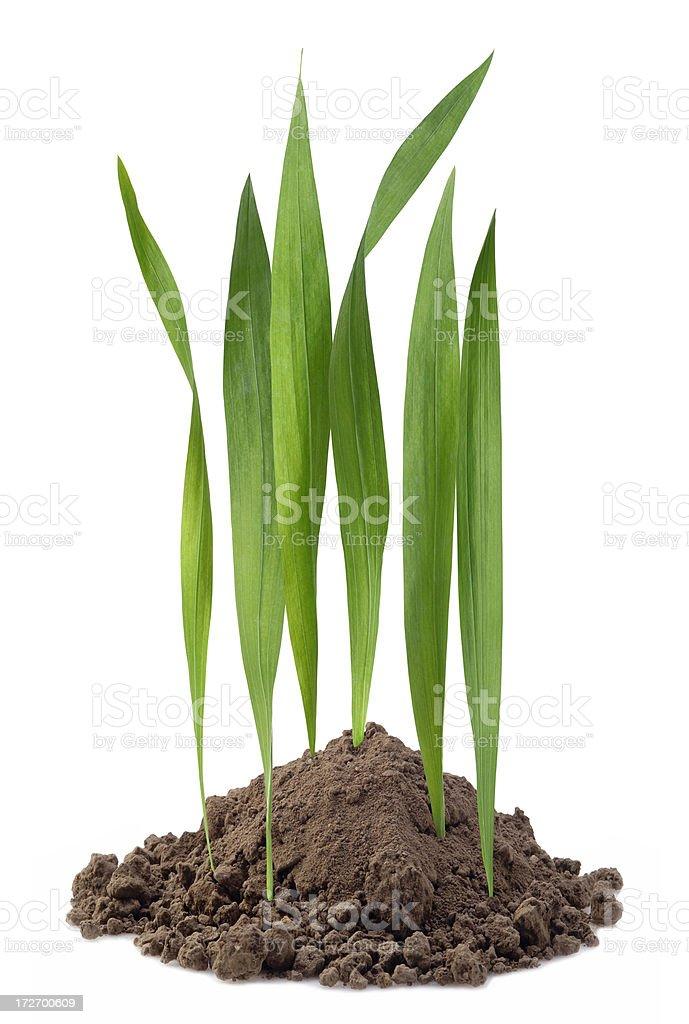 Mini Lawn royalty-free stock photo